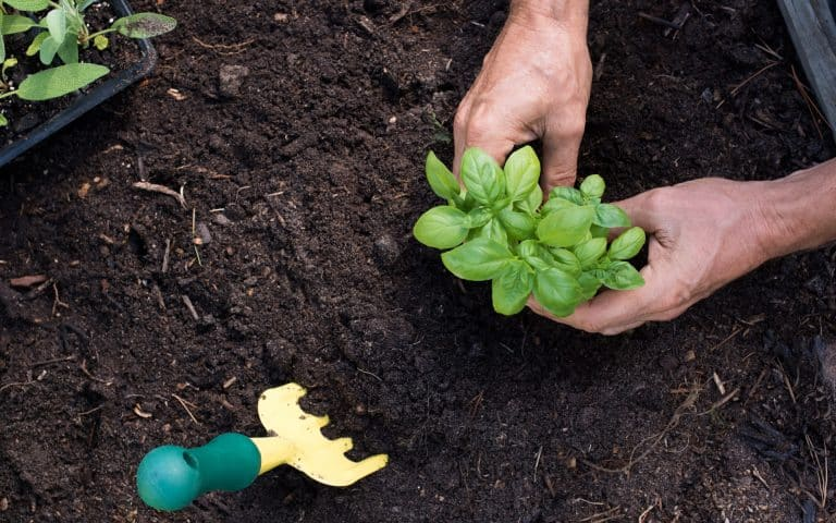 Toronto Summer Landscaping Services - Cultivating
