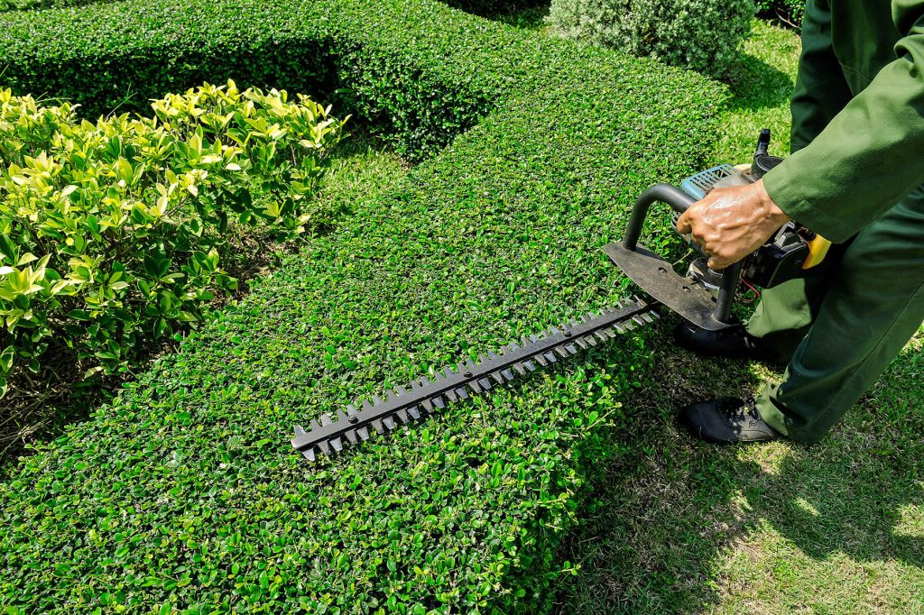 Pruning Shrubs and Hedges