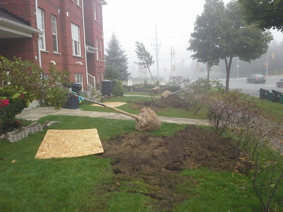Property Maintenance on Condos - Tree Planting