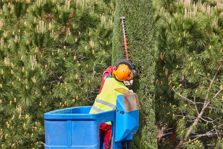 Tree and Shrub Pruning